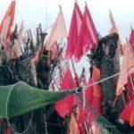 Flaggen und Bäume
