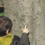 Reggio Projekt: Lied der Bäume