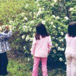 Reggio Kita: Kinder stellen Rosenparfüm her