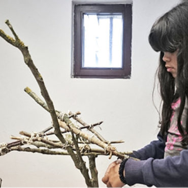 Der Wald im Klassenzimmer