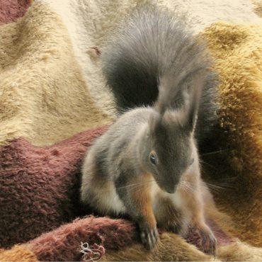 Besucher und Mitbewohner: Das Eichhörnchen