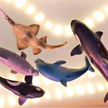 Kraken, Haie und Piraten