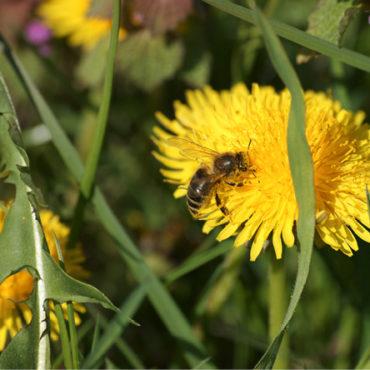 Bienen diskutieren nicht…