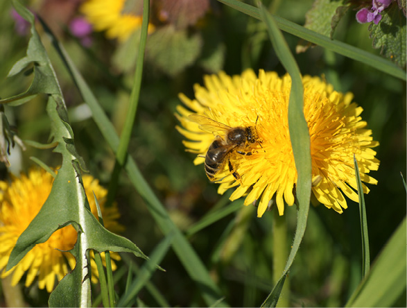 Bienen Diskutieren Nicht Wamikide
