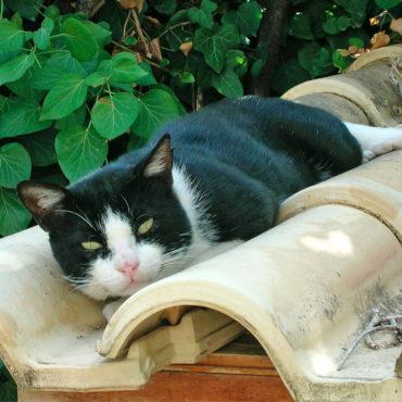 Besucher und Mitbewohner: Die Katze