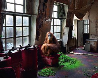 Was wäre wenn …  sich die Natur einst von Menschen bewohnte Orte zurückerobert? Der Fotograf Henk van Rensbergen sucht solche Orte.