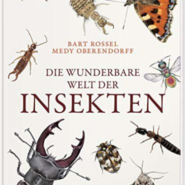Kinderbuch der Woche: Insekten – kleine Wunder