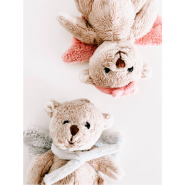 Der Rechtsruck bei den Braunbären